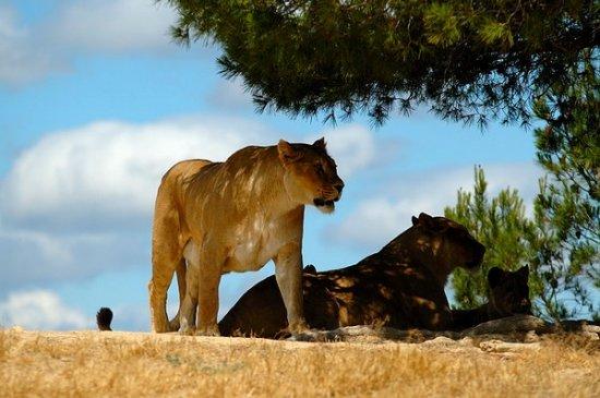 zoo de sigean